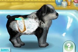 《宠物小狗养成记》游戏画面1