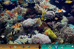 《海底世界找动物》游戏画面1