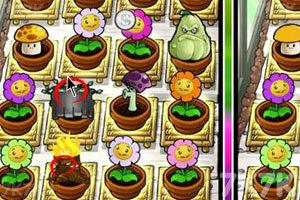 《植物大战僵尸之整理后花园》游戏画面8