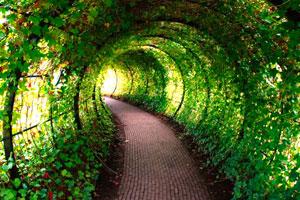 《逃出美丽的花园》游戏画面1
