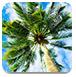 棕櫚樹找箭靶