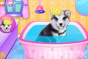 《小狗温泉沙龙》游戏画面2