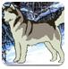 救援雪橇狗