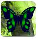 綠色的秋天森林逃脫