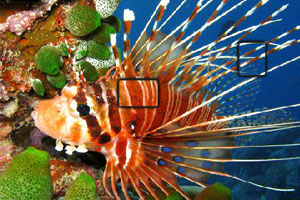 热带鱼水下世界