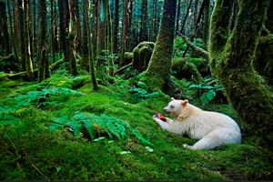 逃离热带森林
