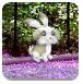 搜索复活节兔子
