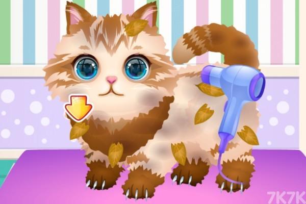 《我的宠物店》游戏画面2